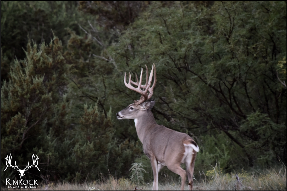 JFort Whitetail Ranch (Southwest Texas)